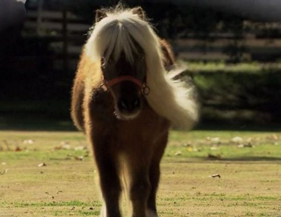 Amy Poehler, Mike Schur talk Li'l Sebastian, 5,000 Candles In The Wind with LAist