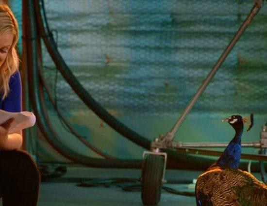 Amy Poehler Participates in New NBC Campaign